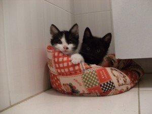 chaton-005-bien-300x225 dans Ils sont à adopter...